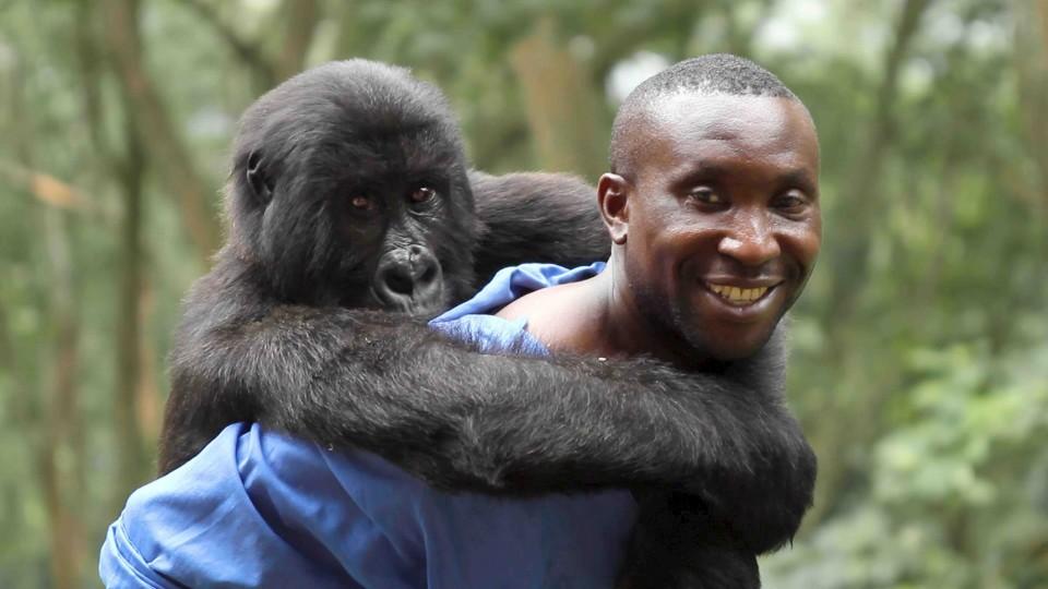 Virunga 02